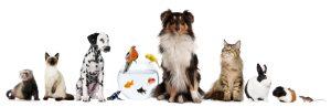 dyregruppe